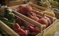 Agricoltura come opportunità lavorativa per persone con lieve disabilità intellettiva